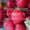 Strawberry – Not Just A Beautiful Fruit