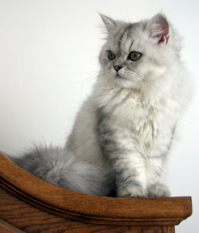 How To Clean Cat Urine And Remove Cat Urine Odor