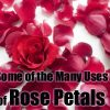 Some of the Many Uses of Rose Petals