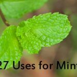 21 Uses for Mint