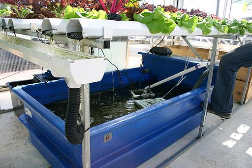 Backyard Aquaponics and How Does it Work