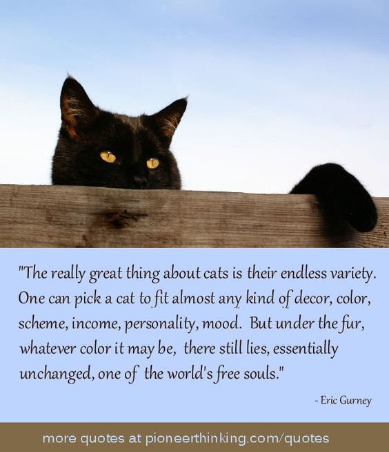 The Really Great Thing About Cats - Eric Gurney