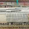 Humane Mouse Trap: Remove Mice from Your Home Without Killing Them