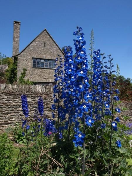 June in The Flower Garden
