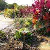 How to Start a Garden – Irrigation Tips
