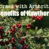 Horses with Arthritis – Benefits of Hawthorn