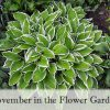 November in The Flower Garden