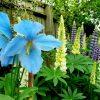 July in The Flower Garden
