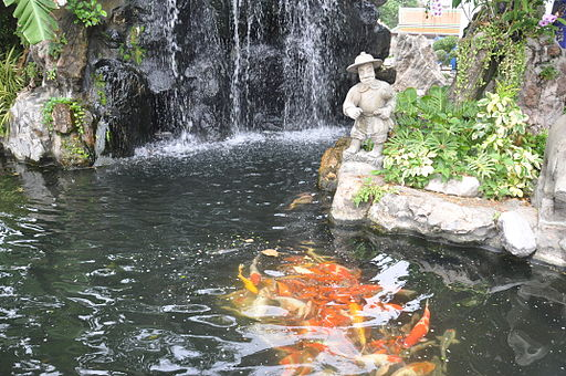Koi pond and waterfall for Large koi pond