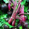 Discover the Greens and Roots from Organic Heirloom Beet Seeds
