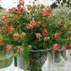 Rose Centerpiece Ideas – How to Create Rose Centerpieces