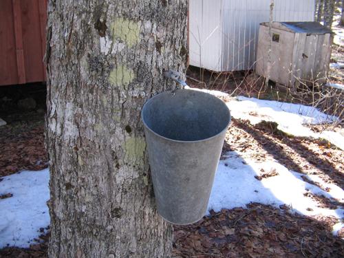 Maple Syrup Bucket