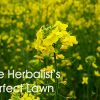 The Herbalist's Perfect Lawn