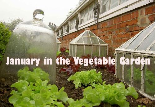 January in the Vegetable Garden