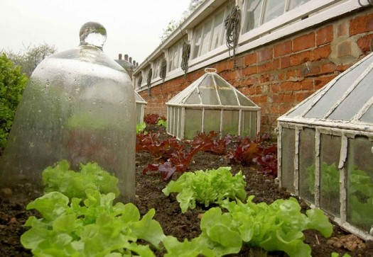 Protect Your Plants with Cloches