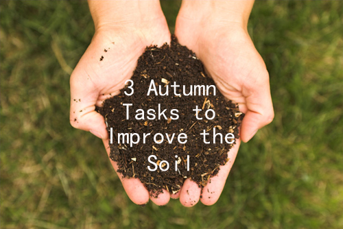 3 Autumn Tasks to Improve The Soil Condition