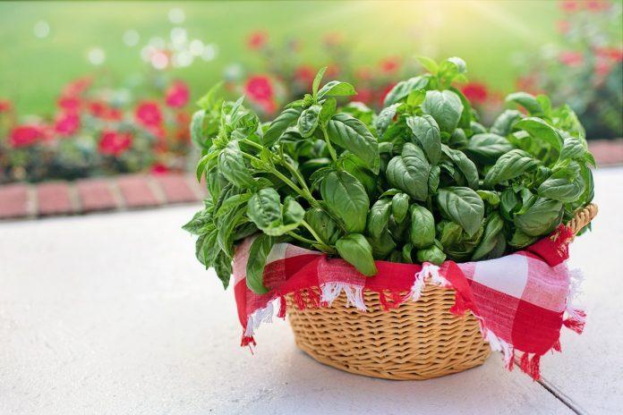 Herb Garden Plants - Top 10