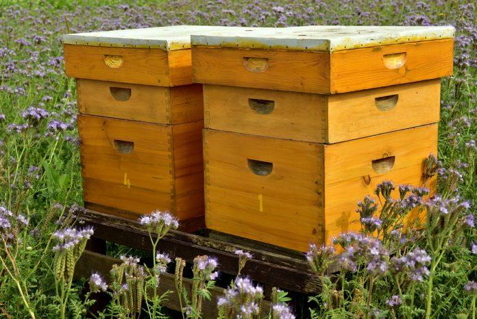 The Homestead Beekeeper - Tips on Keeping Bees