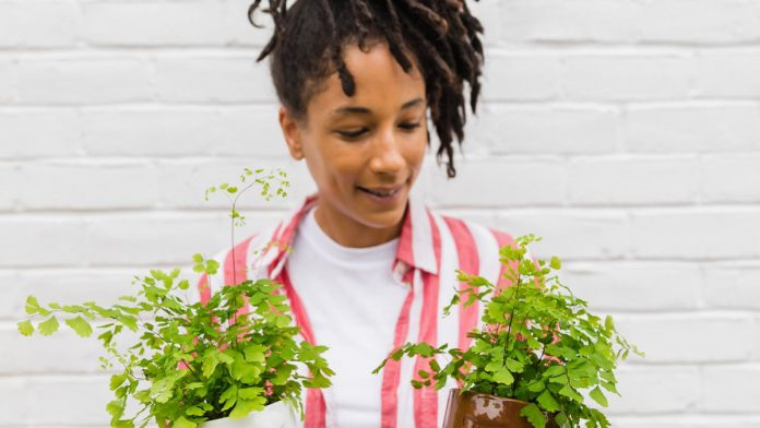 How Plants Improve Mental and Physical Wellness