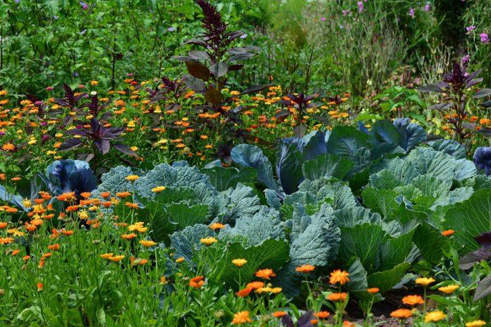 June in The Vegetable Garden