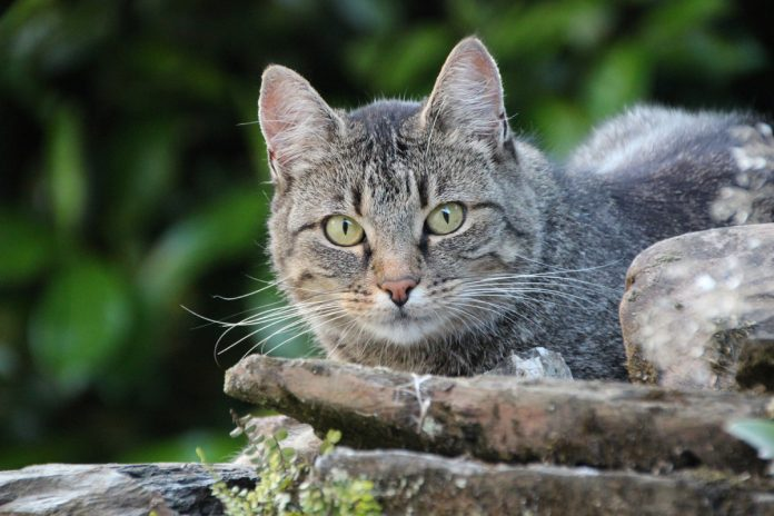 Keeping Cats Out of Your Home Vegetable Garden