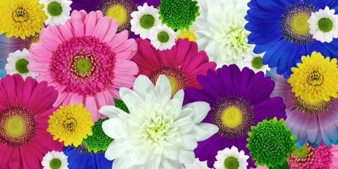 A Guide About Chrysanthemum Flower Types