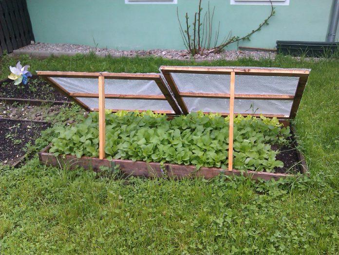 Make a Cold Frame for Winter Gardening