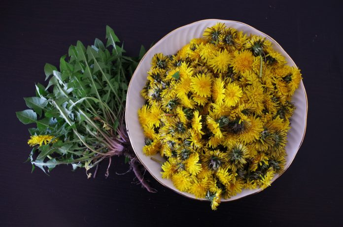 Top Tips for Spring Foraging