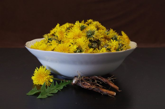 Dandelions: A Good Friend in Time of Need