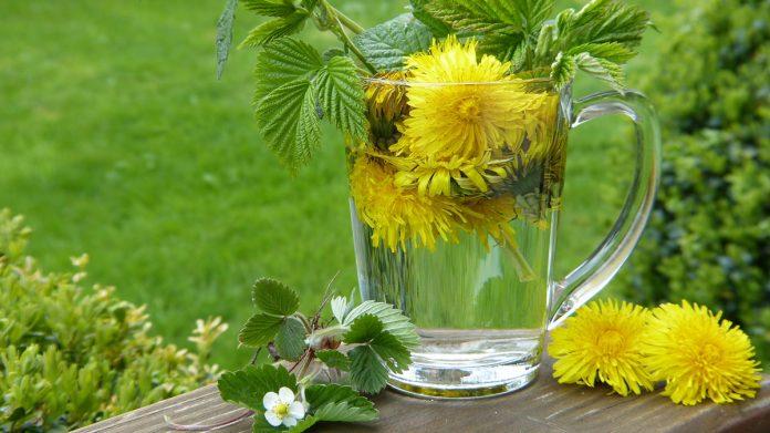Dandelions and Your Health