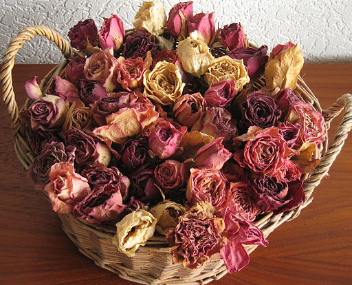Drying Flowers with Silica Gel