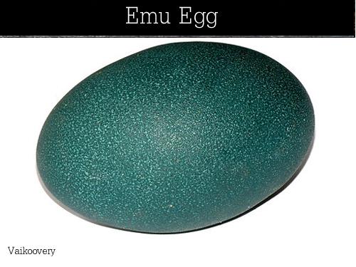 emu_eggs-Vaikoovery-1