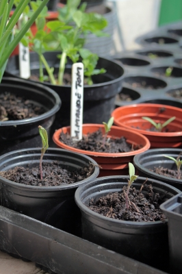 How to Choose The Best Lighting for Growing Tomatoes Indoors