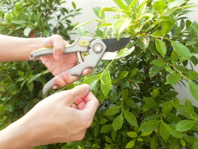 Jobs to Do in The Garden During September