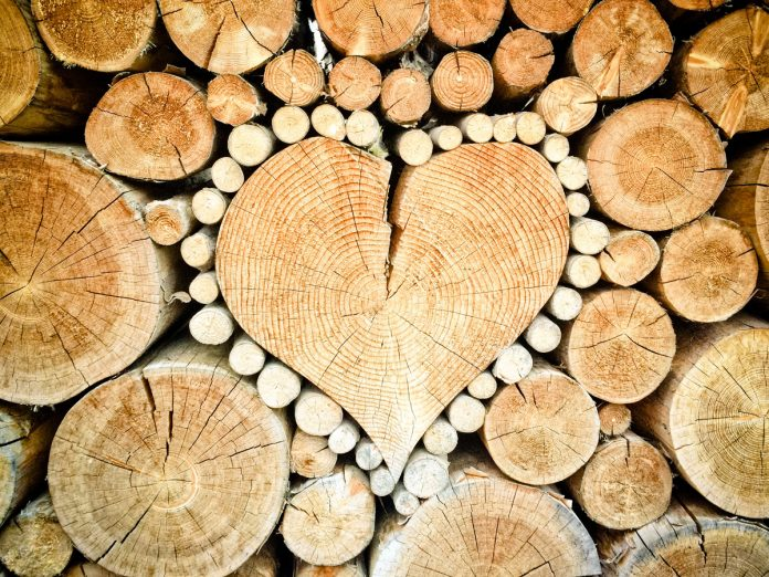 How to Store and Dry Firewood