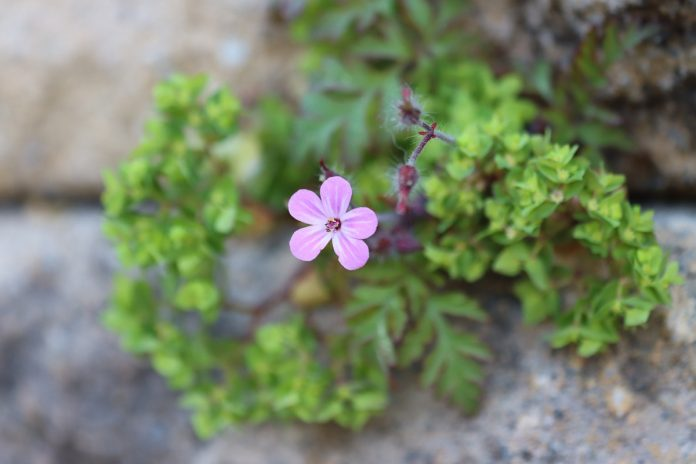 Herbs for Edible Walls