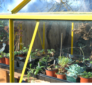 Modify Your Wooden Garden Shed to Make Greenhouses