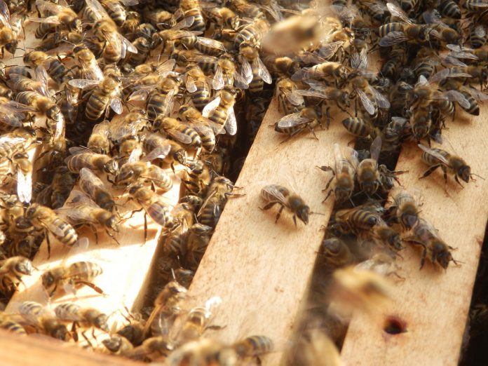 Different Ways of Getting Honey Bees Into Your Own Hives