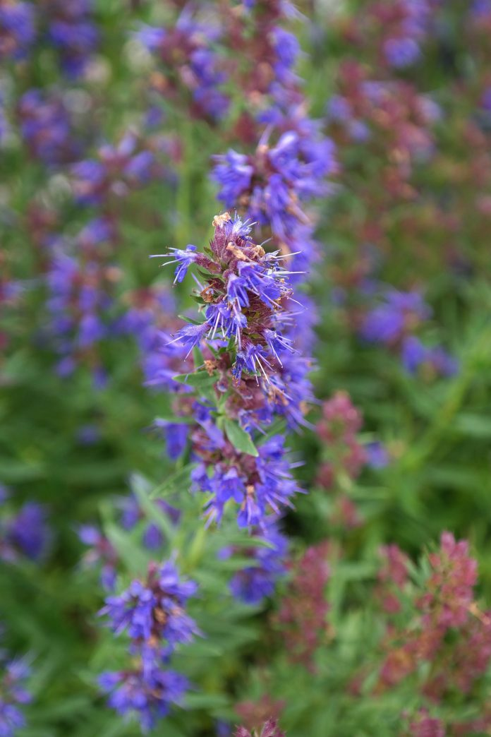 Interesting Biblical Herbs and Their Qualities