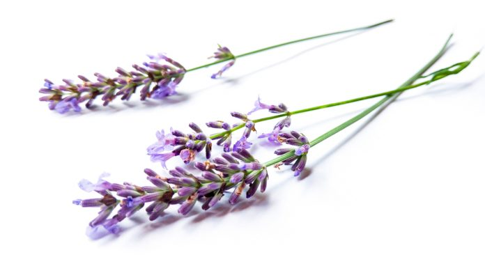 Top Herbal Remedies for Pain