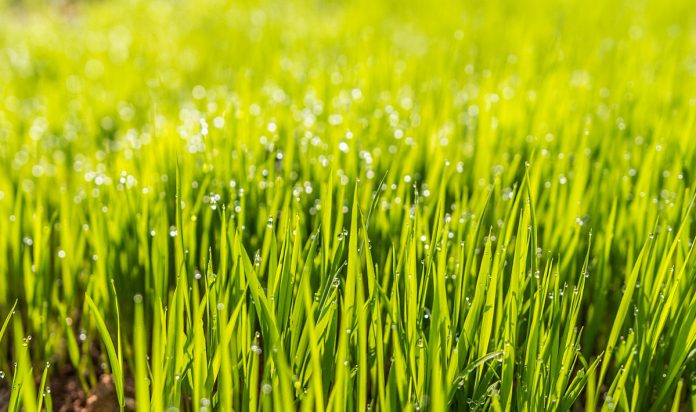 Natural Lawn Care - Get Your Lawn Off Drugs