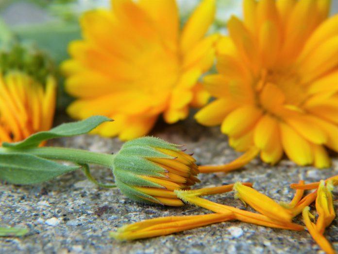 Edible Garden Flowers