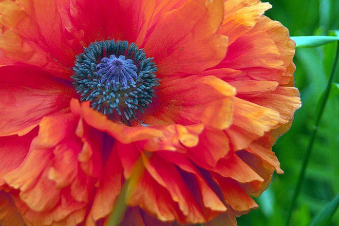 Low Allergy Annuals