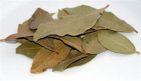 The Noble Bay Leaf from Kitchen to Craft