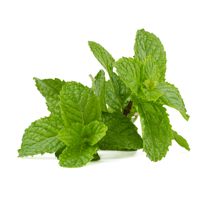 How to Propagate and Grow Mint