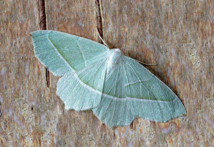 Natural Moth Repellents