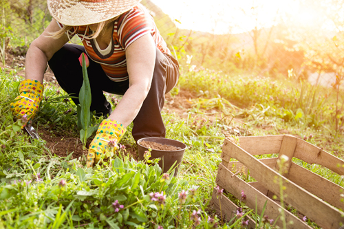 How to Conquer Gardening Pain