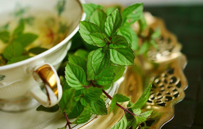 Growing Tea Herbs for Health and Pleasure