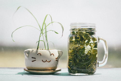 Herbal Extracts are Easy to Make in Your Kitchen
