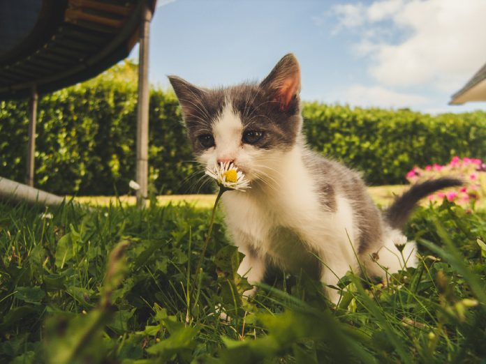 Aromatherapy for Cats